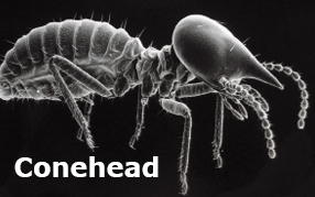Fight The Conehead Termite Invasion | Termite Boys