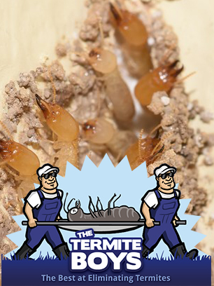 How Do Termites Penetrate Rigid And Durable Non-Wood