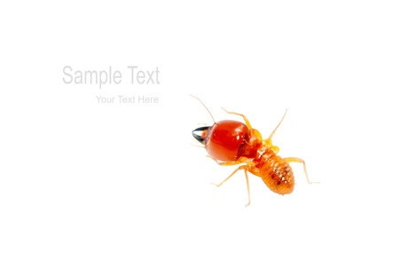 5 Basic Termite Tips | The Termite Boys