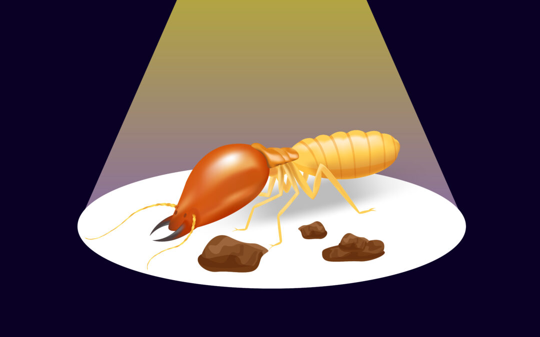 On The Fly: Are They Termites or Ants?