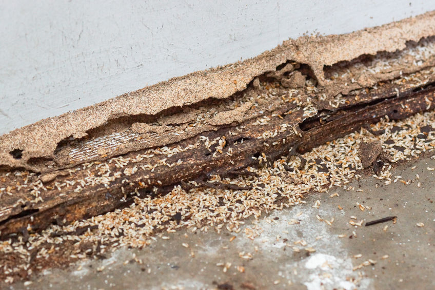 The Importance Of Early Termite Detection